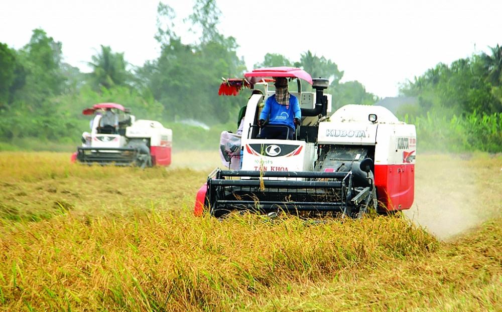 Giá trị thương mại ngành lúa gạo Việt Nam hoàn toàn có thể nâng cao hơn nếu làm tốt khâu xây dựng thương hiệu. Ảnh: Nguyễn Thanh