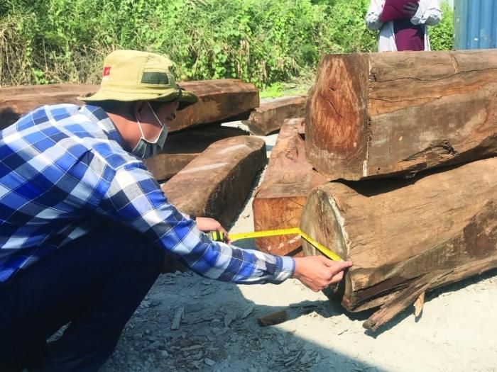 """850 m3 gỗ giáng hương Tây Phi """"đội lốt"""" hàng Trung Quốc"""