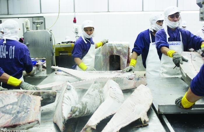 Xuất khẩu cá ngừ tăng cao tại hàng loạt thị trường