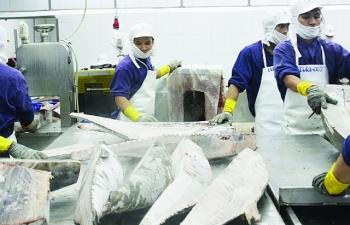 Xuất khẩu cá ngừ: Kim ngạch giảm, thị trường tăng