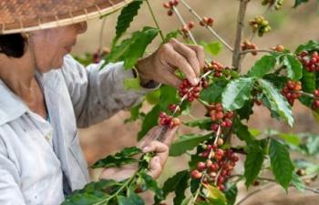 CNN ca ngợi cà phê Việt Nam tạo cảm hứng cho thế giới
