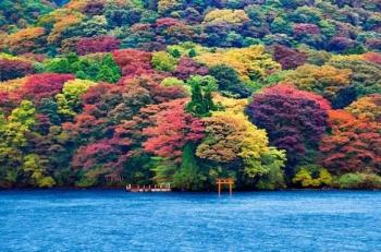 Khám phá mùa thu Nhật Bản vời đường tour mới