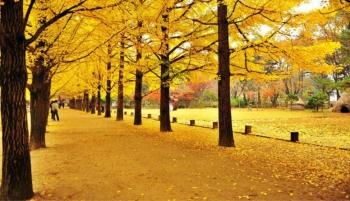 Thưởng ngoạn mùa Thu quyến rũ tại Nhật Bản, Hàn Quốc
