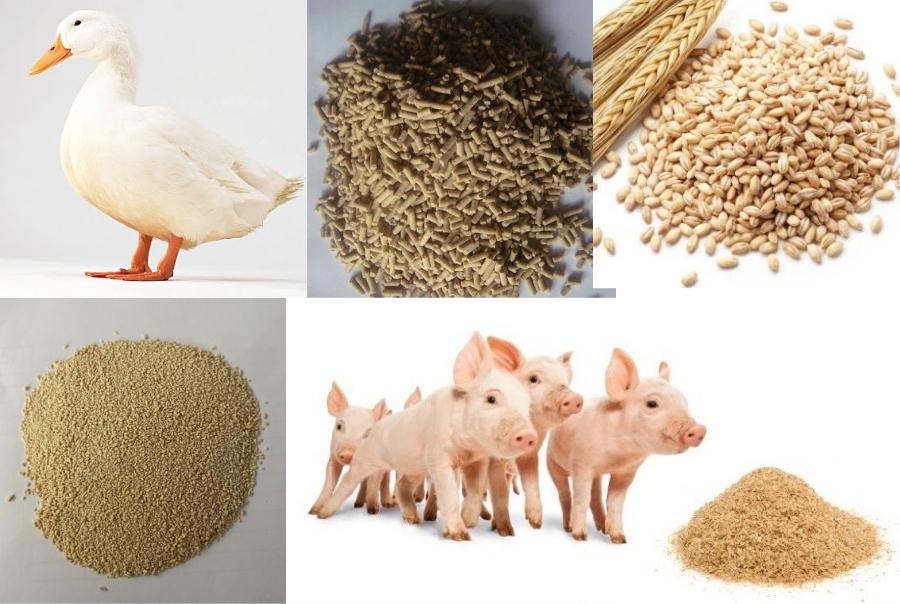 Chi hơn 1 tỷ USD nhập khẩu thức ăn chăn nuôi từ Argentina