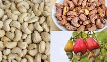 Sau động thái của Hải quan, hạt điều nhập khẩu từ Campuchia giảm hơn 50 lần