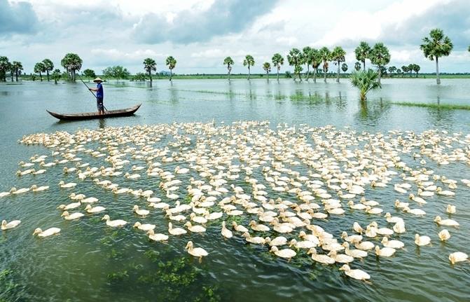 Ứng phó nguy cơ hạn hán, thiếu nước, xâm nhập mặn ở Đồng bằng sông Cửu Long