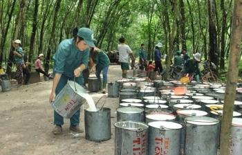 Xuất khẩu cao su tăng vùn vụt vẫn âu lo vì phụ thuộc Trung Quốc