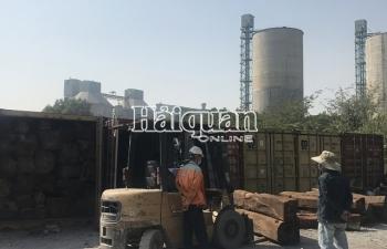 Chặn bắt 50 container gỗ quý nhập lậu
