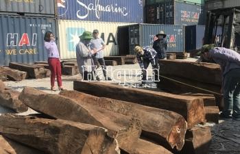 Hoàn tất kiểm tra 50 container gỗ quý nhập lậu