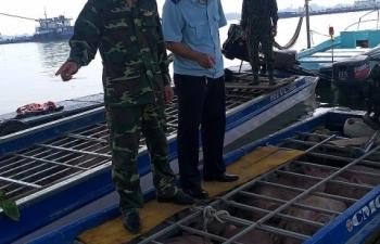 Hải quan An Giang: Liên tiếp bắt giữ lợn nhập lậu