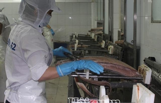 Xuất khẩu cá ngừ sang Italy tăng đột biến
