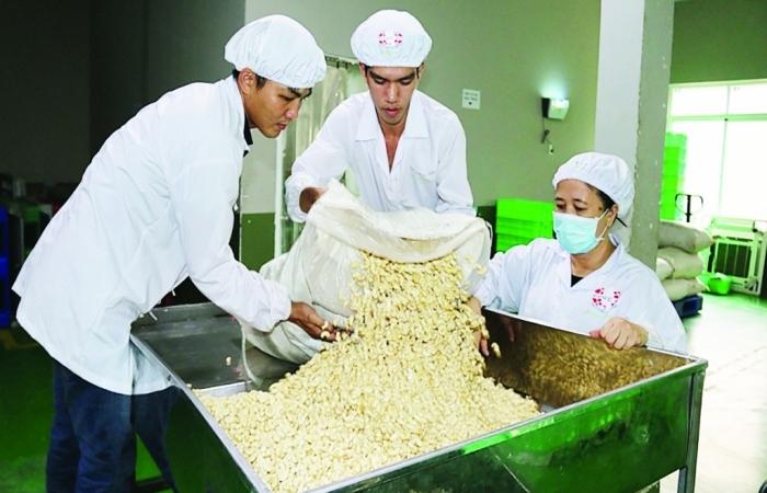 Cạnh tranh gay gắt, thị phần hạt điều Việt Nam tại Hoa Kỳ vẫn chiếm 89,26%