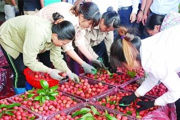 Trung Quốc được mùa, xuất khẩu vải thiều nhiều âu lo