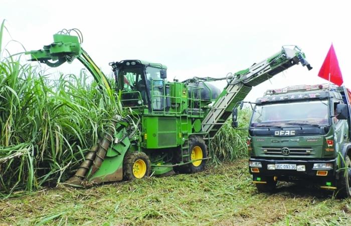 Đường nhập khẩu giảm mạnh,  mía đường trong nước vẫn lao đao