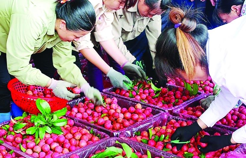 """Điểm nghẽn logistics """"cản chân"""" nông sản Việt"""