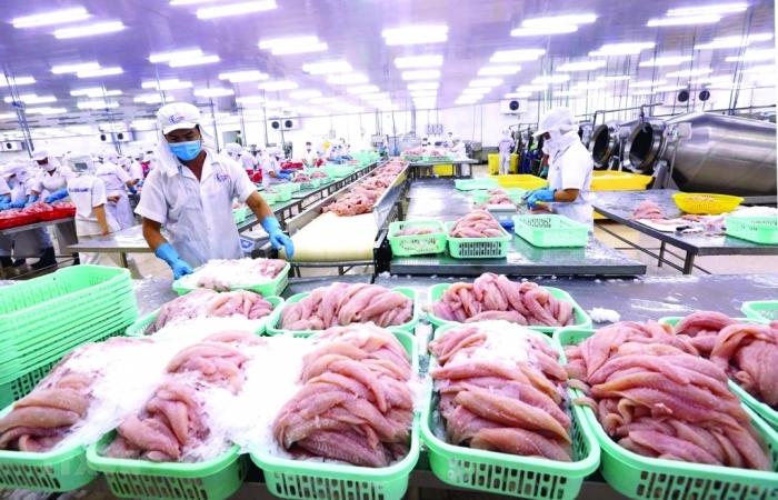 Cần cơ chế liên vùng để khôi phục sản xuất, xuất khẩu cá tra