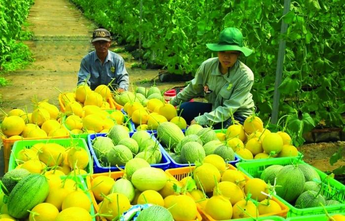 Nông sản Việt tìm lối đi khi nhiều nước nâng hàng rào kỹ thuật