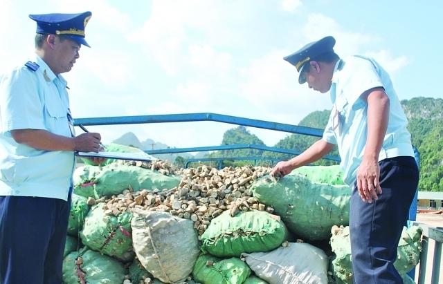 Xuất khẩu sắn sang Trung Quốc thấp nhất từ đầu năm đến nay