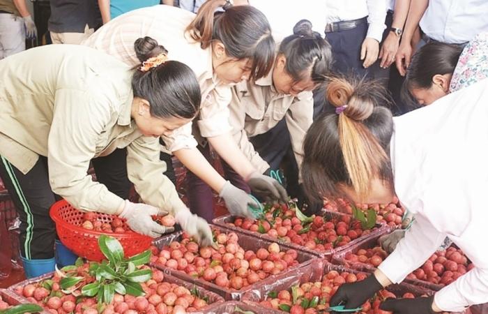 Vải tươi Việt Nam có thể không sang Nhật trong năm 2020