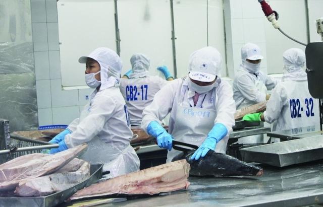 """EVFTA """"cứu"""" xuất khẩu cá ngừ không bị giảm sâu"""