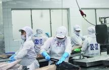 Xuất khẩu cá ngừ hộp sang nhiều thị trường bật tăng