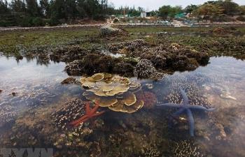 Đến Hòn Yến của Phú Yên để ngắm san hô biển tuyệt đẹp