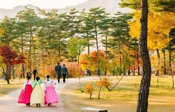 Những con đường ngập tràn cảnh sắc mùa thu ở Seoul