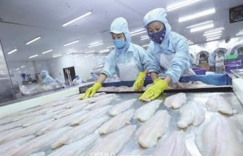 Mỹ công nhận hệ thống tương đương:  Cá tra Việt rộng đường xuất khẩu