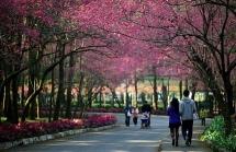 5 trải nghiệm mùa xuân ở Đài Loan