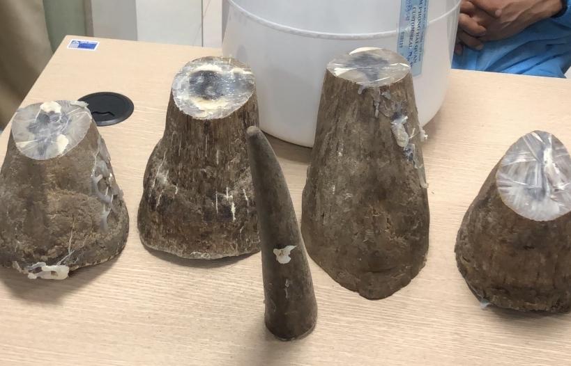 Quảng Ninh: Khởi tố vụ vận chuyển gần 8kg sừng tê giác qua sân bay Vân Đồn