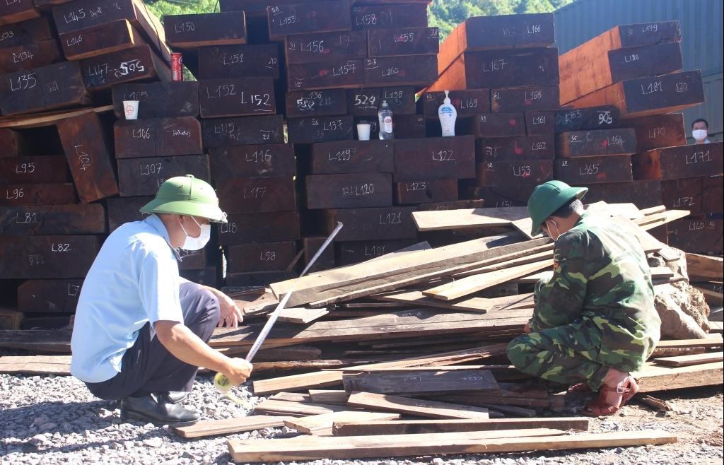 Hải quan Quảng Trị được nhận Thư khen về thành tích phối hợp thu giữ 78 m3 gỗ quý