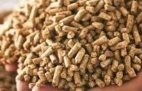 Đề xuất tạm ngừng đưa Giấy CFS vào hồ sơ kiểm tra chất lượng thức ăn chăn nuôi