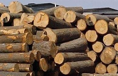 Gỡ vướng thực hiện thủ tục xuất nhập khẩu gỗ