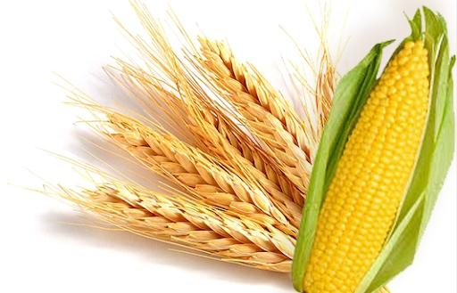 Đề xuất giảm thuế nhập khẩu lúa mỳ và ngô về 0% và 3%