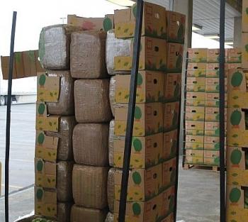 2 tấn cần sa ẩn lậu trong lô hàng chuối