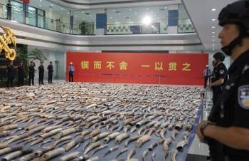 Bắt giữ 7,5 tấn ngà voi