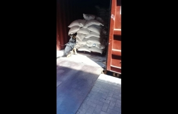 Hải quan Brazil thu giữ gần 1,5 tấn cocaine