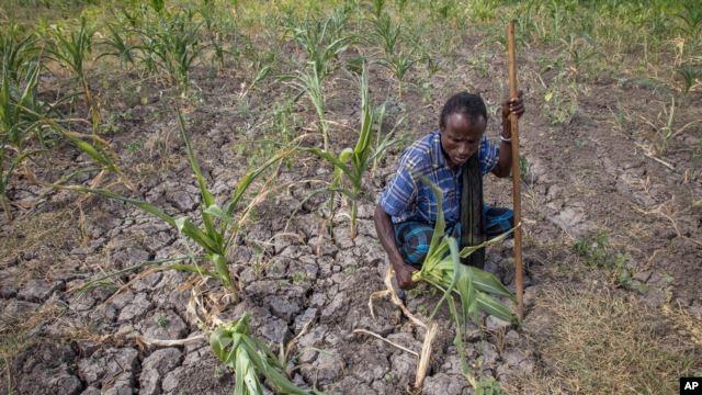 Châu Á có tới hơn 500 triệu người thiếu đói