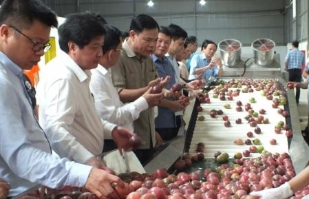 Australia thúc đẩy mở cửa cho tôm tươi, chanh leo, hoa tươi Việt Nam
