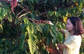 Xuất khẩu cà phê: Xa xôi đích đến 6 tỷ USD?