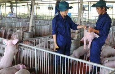 Nhập khẩu thịt tăng hơn 400%, Hội Chăn nuôi Việt Nam kiến nghị khẩn lên Thủ tướng