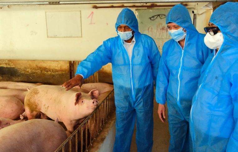 Kiểm soát tốt dịch Covid-19, giá lợn bật tăng