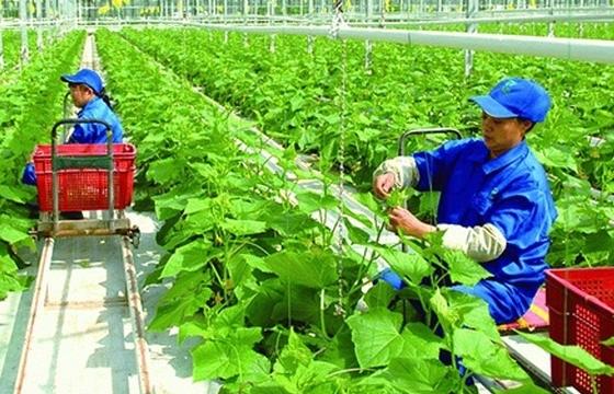 Đề xuất 8.600 tỷ đồng hỗ trợ doanh nghiệp đầu tư vào nông nghiệp, nông thôn