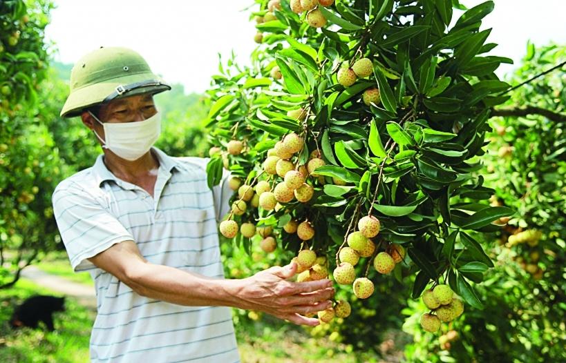 Hợp sức tiêu thụ nông sản