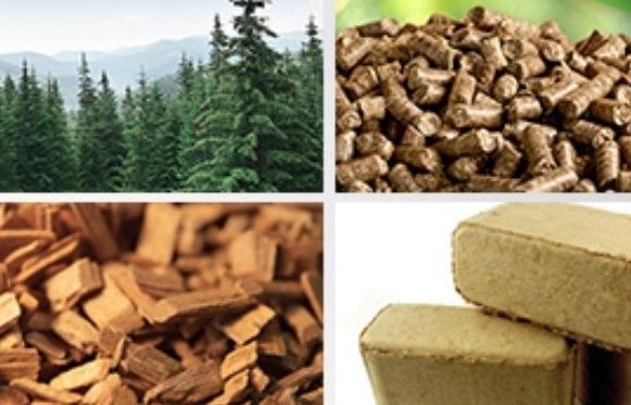 QUATEST 3 cung cấp dịch vụ thử nghiệm viên nén gỗ